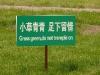 3-10-chinglish-funny