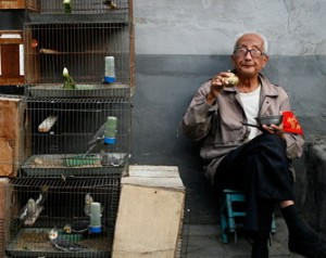 old chinese man in hutong selling birds in alley