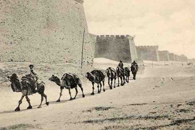Camels trekking near the Great Wall of China