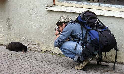 A man taking a photo of a street cat eating