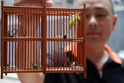 A Chinese man shows off his prized cricket